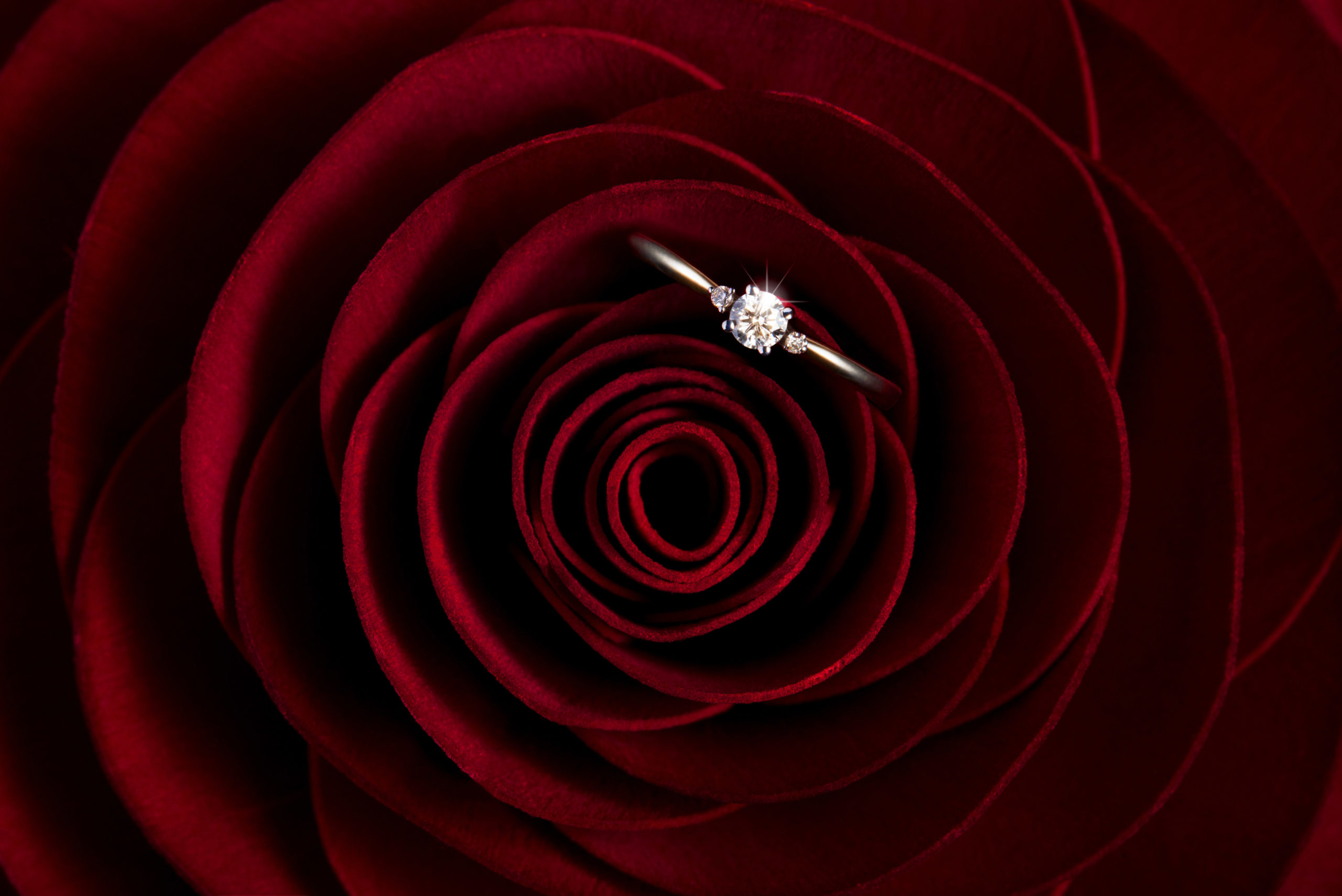 diamond ring on a red rose